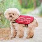Poodle Rescue