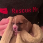 Rescued Pup Enjoys Bath Time