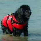 World's First Airborne Dog Rescue Team