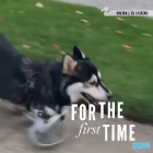 Adorable Animals Run for the First Time
