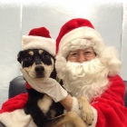 Santa Claus Poses with Dogs