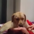 Dog Saves Her Human's Life During Seizure