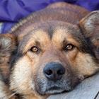 Pet Talk: Seizures In Dogs