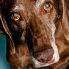 seniordogs_sm.jpg