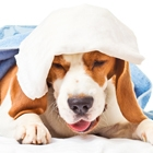 What Are the Signs of Kennel Cough?