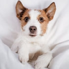 Should You Let Your Dog Sleep in Bed with You?