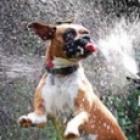 sprinkler-sm.jpg
