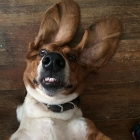 10 Dogs Who Are Just Really Excited to Be Entered in Our Star Dog Contest