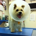 Jules the dog at the vet, photo by keatssycamore via Flickr