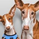 ViaGen Pets and Equine