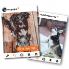 The Download: Addictive New App For Animal Lovers