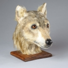 Neolithic Dog Head