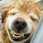 Tips for A Dazzling Doggy Smile