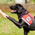 The Seeing Eye Guide Dog Birthday