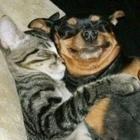 Valentines Animals