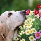 why do dogs sniff