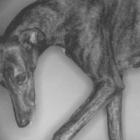 greyhound-teaser.jpg