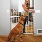 Pet Gate from Paw Seasons