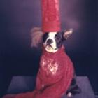 DoggieGaga_thumb.jpg