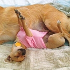 Funny Dogs Sleeping in Strange Positions