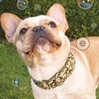 Dogs & Bubbles!
