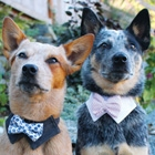 10 Dapper Dogs