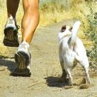 10 Best Dog Breeds for Runners