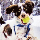 Dogs Who LOVE Snow!