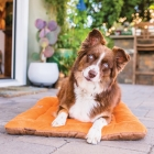 Goods to delight you and your dog