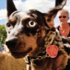 weinerdog_thumb.jpg