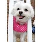 Puppy Bumper stuffed collars