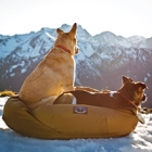 Summit Bed from Skookum Dog