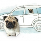 Passenger Pets