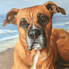 Lisa Bane Art pet portrait of dog at the beach