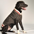 The Boyfriend Sweater for Dogs
