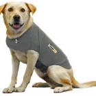 Modern Dog Fave Find Thundershirt