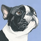 Custom Pet Portraits by Art by Manda