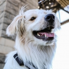 Pod3 extends connected pet technology to tracking virtually everything