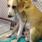NIH Bans the Use of Dogs from Random Source Class B Dealers