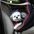 PupSaver's Rear-facing Small Dog Car Seat