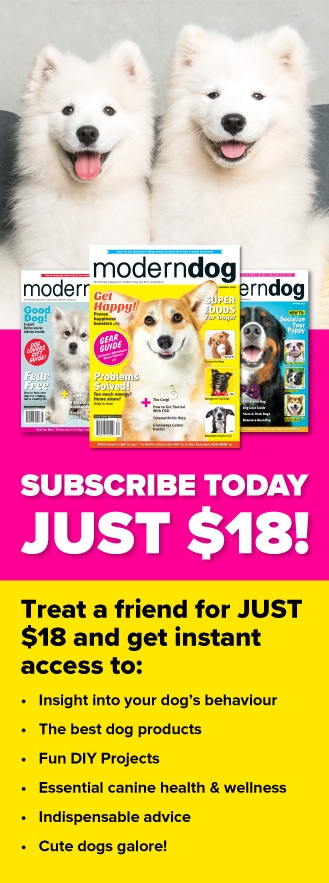 Give A Gift Subscription to Modern Dog!