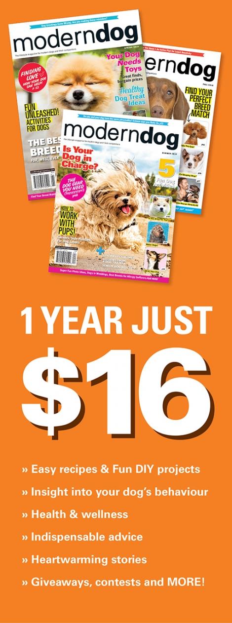 Subscribe to Modern Dog Magazine + DOGTV!