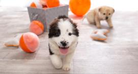 Best Friends Puppy Day