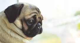 Help Your Dog Adjust To Alone Time