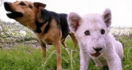 Dog & Lion Are Best Friends