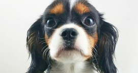 When Should You Bring Your New Puppy Home?