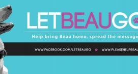 Dog of the Week Beau in Fight For His Life