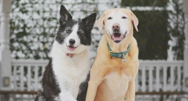 Dogs Who Have Got Valentine's Day DownDogs Who Truly Get Valentine's Day