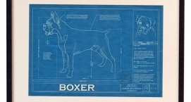 Animal Blueprint