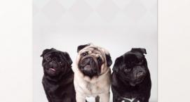 The Dog Studio